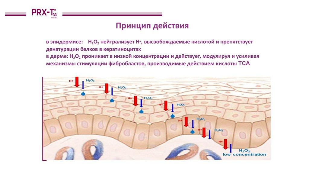 PRX терапия (4)